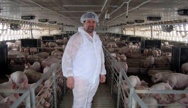 Foto: Joburi în străinătate. Se caută muncitori în fermele de porci