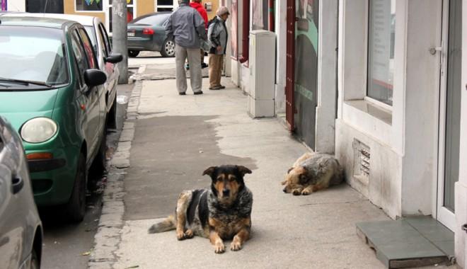 """Foto: Ce se întâmplă cu maidanezii din Constanţa: """"Eutanasierea nu a fost oprită"""""""