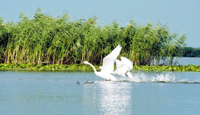 Foto: Croaziere de neuitat în Rezervația Biosferei Delta Dunării