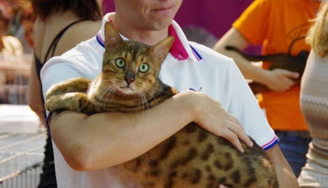 Foto: Miauuuu… Haideţi să vedeţi cele mai frumoase pisici!