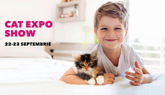 Foto: Expoziţie  de pisicuţe,  în week-end, la VIVO! Constanţa