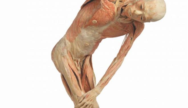 Foto: Corpul uman,  într-o expoziţie  în premieră la Constanţa