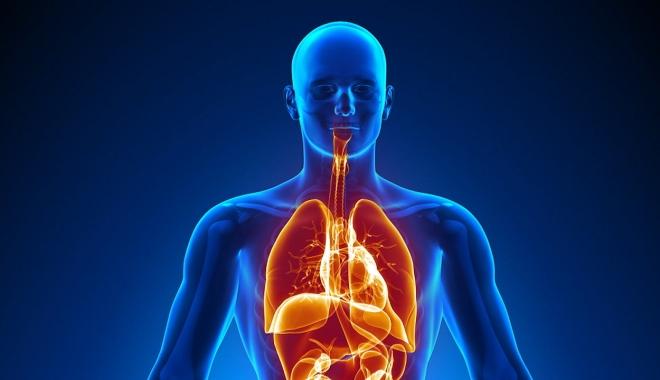 Foto: A fost descoperit un nou organ al corpului uman