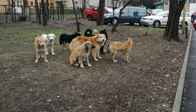 """Foto: Feriți-vă de câini! Medicii atrag atenția: """"Începe sezonul de mușcături"""""""