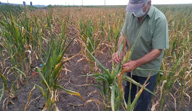 Fermierii ar putea primi banii pentru despăgubirile de secetă - fermieriiarputeaprimi-1626716350.jpg