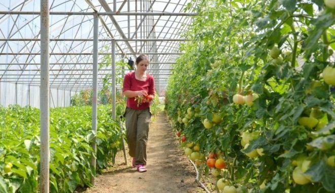 """Fermierii pot depune cereri pentru programul """"Legume în spaţii protejate"""" - fermieriipotdepune-1626288186.jpg"""