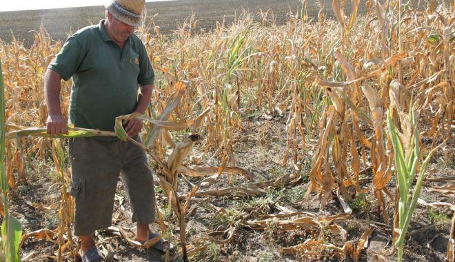 Foto: Fermierii s-au mâniat pe Guvernul Orban și i-au cerut demisia