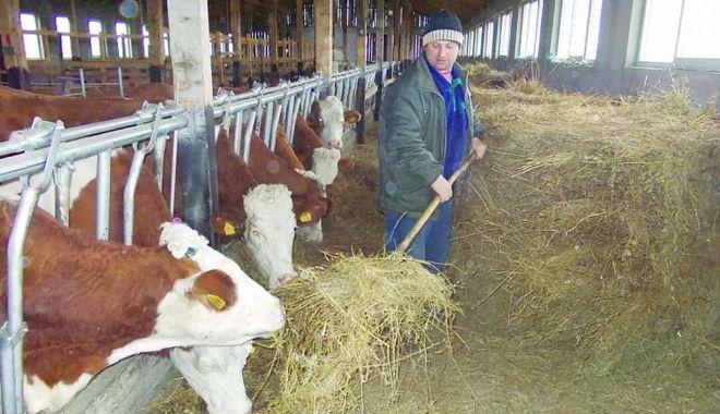Fermierii pot primi ajutor de stat, dacă angajează tineri - fermieriivorprimiajutor2-1610563953.jpg