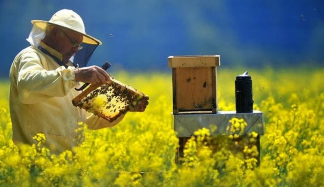 Foto: Finanţare pentru apicultori