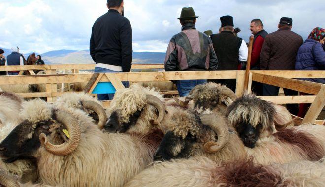 Foto: Finanțare pentru crescătorii de animale