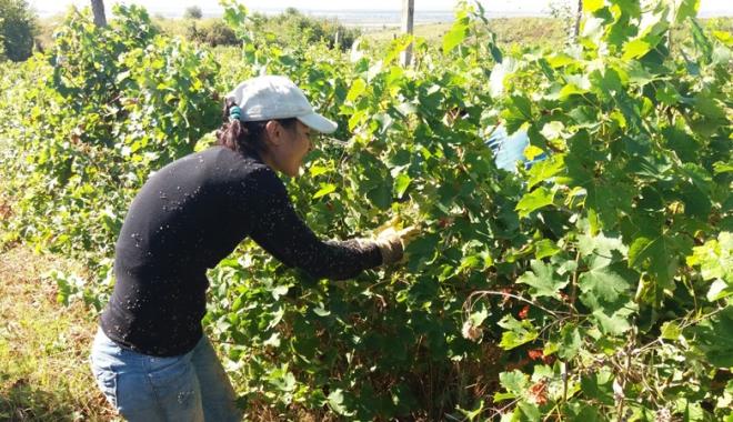 Foto: Fiscul vinde plantaţii de viţă de vie,  colecţii de vinuri, ateliere, mori şi terenuri