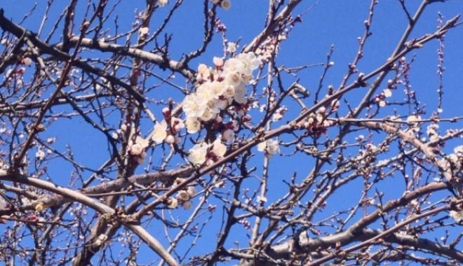 Foto: Cum va fi vremea la Constanţa, mâine, de Florii