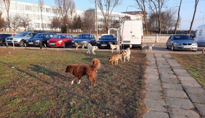 """Cine ne scapă de maidanezi?    """"Sunt haite de 8-10 câini, nu vrem să se ajungă la drame"""" - fond-1620838773.jpg"""