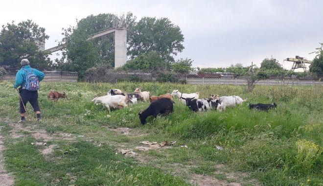 """Salvați zona """"Energia""""! A devenit raiul buruienilor și locul de păscut al caprelor - fond-1622385872.jpg"""