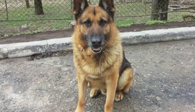 Băiețel surdo-mut dispărut, găsit cu ajutorul a doi câini-polițiști eroi - fondbaietelsurdomutdisparutathos-1423151589.jpg