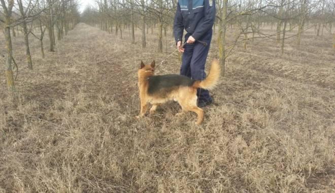 Băiețel surdo-mut dispărut, găsit cu ajutorul a doi câini-polițiști eroi - fondbaietelsurdomutdisparutlepac-1423151672.jpg