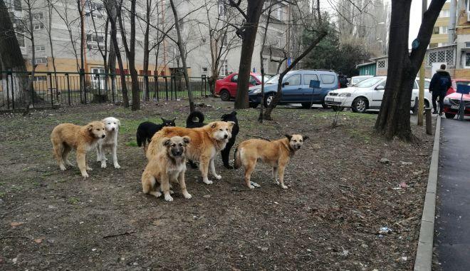 """Foto: Maidanezii """"încolţesc"""" Constanţa. Când va fi gata adăpostul de câini şi când vor fi adunaţi de pe străzi?"""
