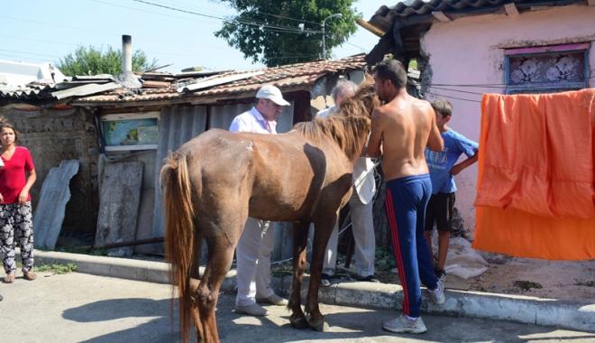 Focar de infecţie în cartierul Palas.  Cine şi de ce i-o fi adus pe romi acolo… - fondcartierromi1-1504799859.jpg