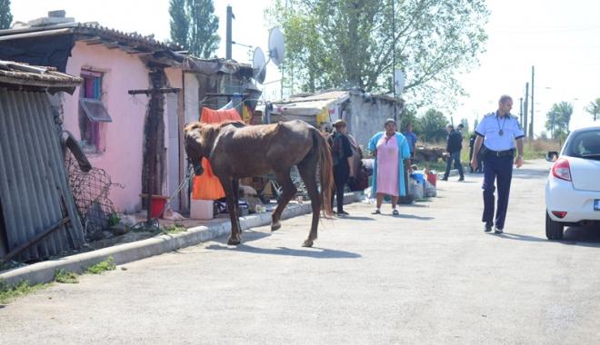 Focar de infecţie în cartierul Palas.  Cine şi de ce i-o fi adus pe romi acolo… - fondcartierromi3-1504799898.jpg