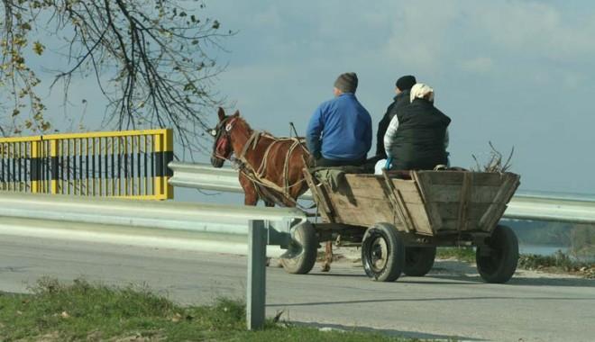 PERICOL MARE: CURSE ILEGALE DE CĂRUŢE pe drumurile din Constanţa! - fondcarute2-1363022260.jpg