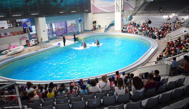 Foto: Investiții la Delfinariu, Planetariu și Acvariu. Delfinii, hrăniți cu capelin din Franța!