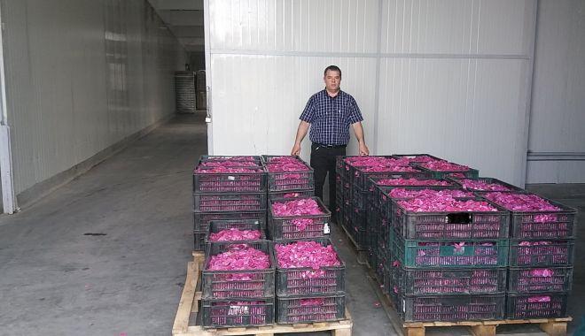 O afacere mai puţin întâlnită. Petalele de trandafiri nu vă îmbogăţesc, dar vă parfumează viaţa - fondprint-1623085134.jpg