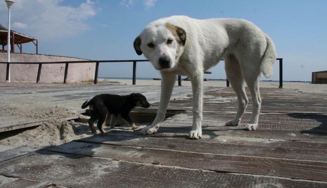 """Haite de câini, """"de pază"""" pe plaja Mamaia. """"Pun în pericol viaţa trecătorilor!"""" - fondprintcaini5-1612292507.jpg"""