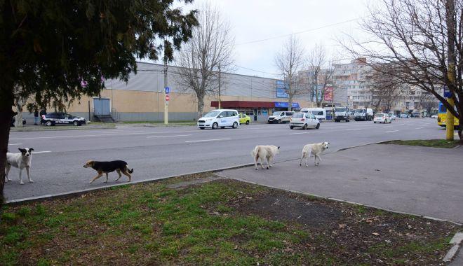 Mii de maidanezi pe străzile din Constanţa. Primăria îi numără, dar nu îi adună - fondprintmiidemaidanezi1-1617301179.jpg