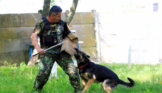 Reba, spaima infractorilor. Cum acționează și cum sunt pregătiți câinii de urmă - fondreba-1431709735.jpg