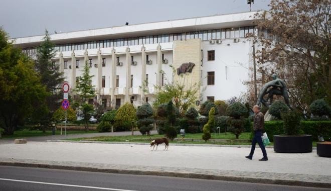 Sufocaţi de rahaţi! Cine adună maidanezii de pe străzile din Constanţa - fotofondcaini-1515339115.jpg