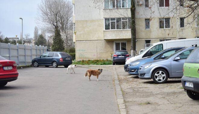 Proprietarii de câini, amendaţi că-i plimbă fără lesă! Pentru maidanezi cine plăteşte amenzile? - fotofondcaini-1523794093.jpg