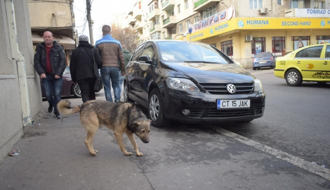Sufocaţi de rahaţi! Cine adună maidanezii de pe străzile din Constanţa - fotofondcaini1-1515339136.jpg