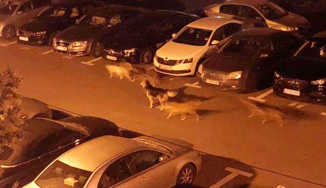 Foto: Haite care terorizează locuitorii din zona Energia.