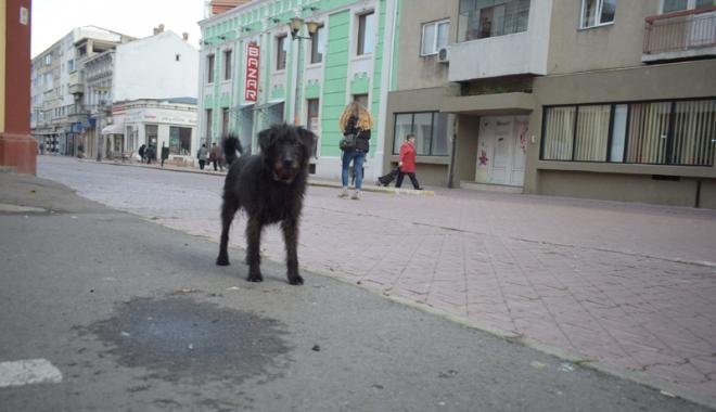Sufocaţi de rahaţi! Cine adună maidanezii de pe străzile din Constanţa - fotofondcaini2-1515339177.jpg