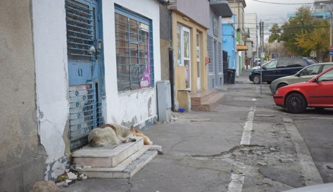 Sufocaţi de rahaţi! Cine adună maidanezii de pe străzile din Constanţa - fotofondcaini3-1515339164.jpg