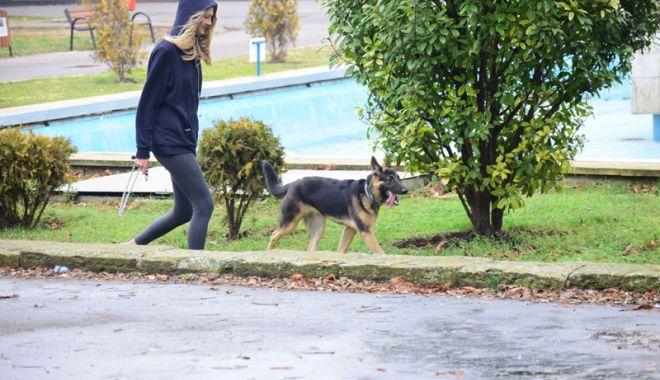 Foto: Proprietarii de câini, amendaţi că-i plimbă fără lesă! Pentru maidanezi cine plăteşte amenzile?