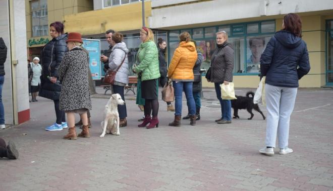 Sufocaţi de rahaţi! Cine adună maidanezii de pe străzile din Constanţa - fotofondcaini4-1515339187.jpg