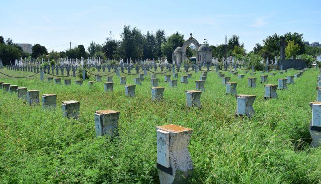 Cimitirul Eroilor din Constanţa, monument de indiferenţă şi lipsă de respect - fotofondcimitir13-1534868666.jpg