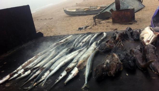 Peşte împuţit şi midii stricate. Cu ce îi aşteaptă cârciumarii pe turişti, în mini-vacanţa de Rusalii - fotofondcontrol2-1496163456.jpg