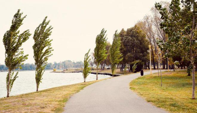 Foto: Se înverzeşte Constanţa? Sute de copaci, arbori şi arbuşti, plantaţi în oraş şi parcuri