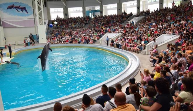 Foto: Protest inedit la Delfinariul Constanţa! Trei activişti  au sărit în bazinul delfinilor