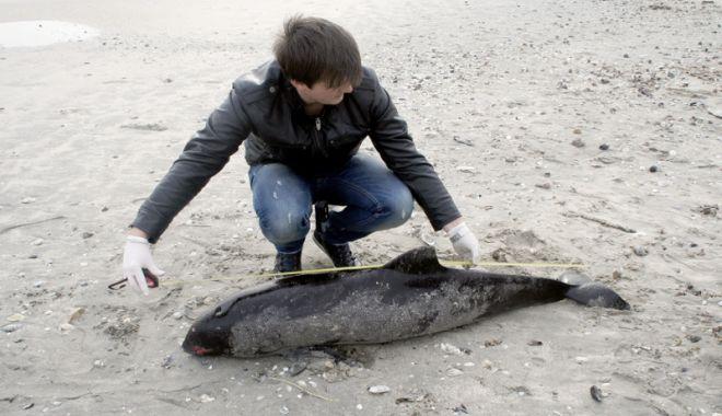Foto: Delfinii, în pericol! Două mamifere, găsite moarte pe plajă