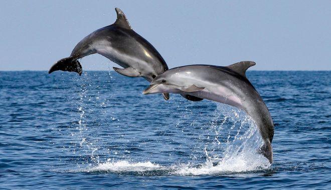 Foto: Semnal de alarmă. Zeci de delfini eșuați, pe plajele de pe litoral