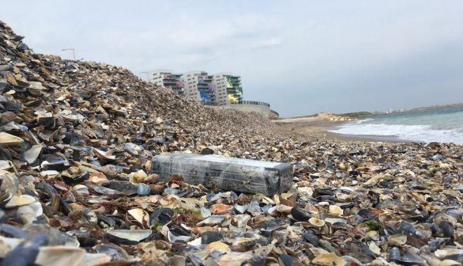 """Paradisul cocainei pe litoralul românesc. """"Nu deschideţi pachetele, vă puteţi pune în pericol viaţa!"""" - fotofonddroguri2-1554665949.jpg"""