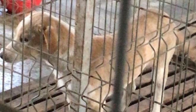 Maidanezii fac legea la Constanţa! Adăpostul e ferecat, iar străzile - pline de câini - fotofondecarisaj1-1507214723.jpg