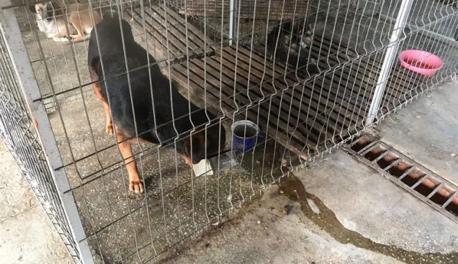 Maidanezii fac legea la Constanţa! Adăpostul e ferecat, iar străzile - pline de câini - fotofondecarisaj3-1507214754.jpg