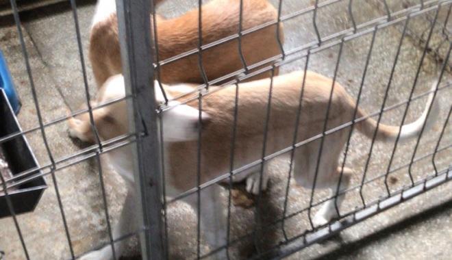 Maidanezii fac legea la Constanţa! Adăpostul e ferecat, iar străzile - pline de câini - fotofondecarisaj9-1507214833.jpg
