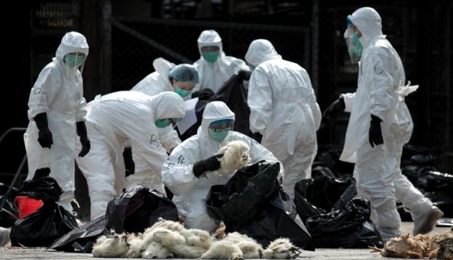 Foto: Gripa aviară ia amploare! Ce trebuie să faceţi pentru a vă proteja