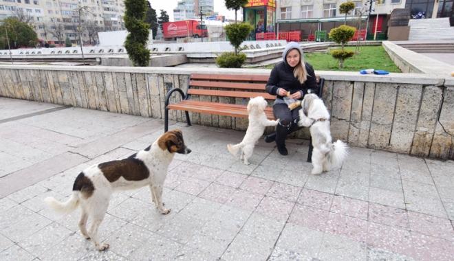 Maidanezii fac legea la Constanţa! Adăpostul e ferecat, iar străzile - pline de câini - fotofondmaidanezi1-1507214845.jpg