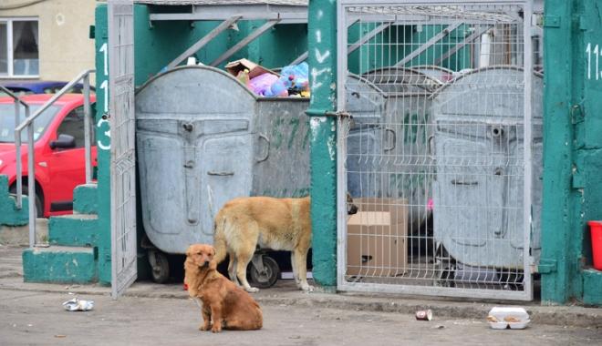 Maidanezii fac legea la Constanţa! Adăpostul e ferecat, iar străzile - pline de câini - fotofondmaidanezi2-1507214854.jpg